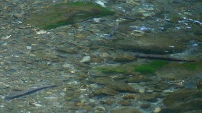 玉簾の滝106