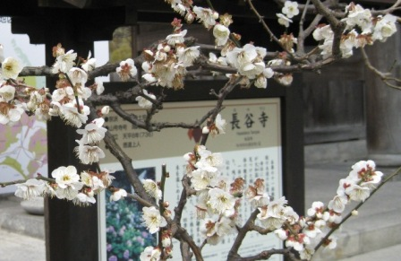 hasegateume