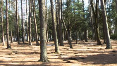 キャンプ場9