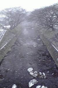 雪の五条川