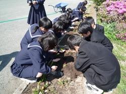 20100517花壇2