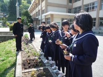 20100517花壇1