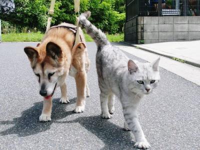 チビちゃん&エリーちゃん散歩