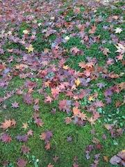 散った紅葉も美しい@東福寺