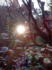 秋と冬の境目@高桐院