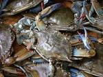 200px-Blue_crab_on_market_in_Piraeus_-_Callinectes_sapidus_Rathbun_20020819-317.jpg