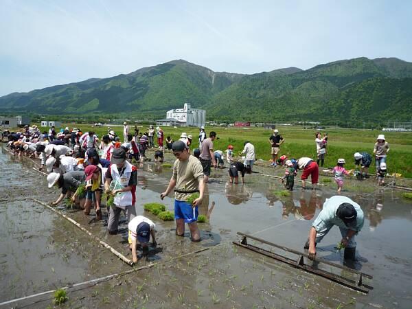 satonohi-taue100515.jpg