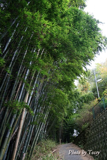 竹やぶの中の道