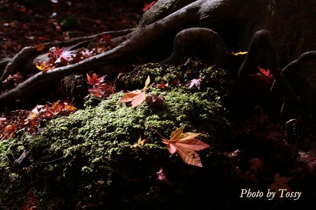 コケの絨毯と紅葉