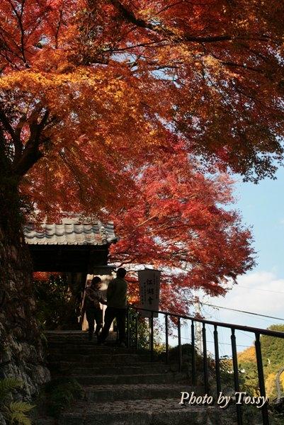 善福寺 石段と山門