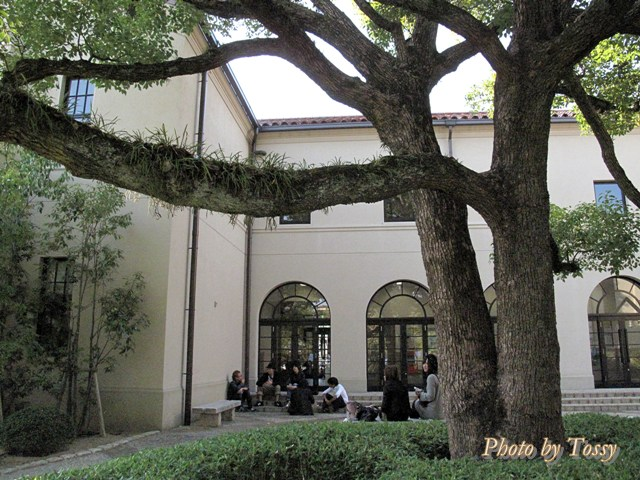 大木のある中庭