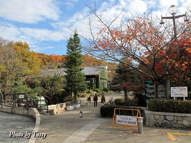 初冬の北山植物園