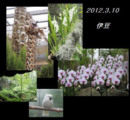 伊豆旅行 3.12