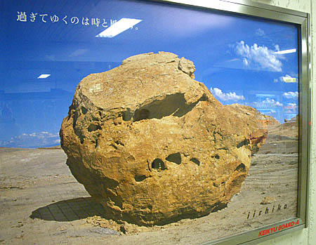 091120恐竜の頭蓋骨