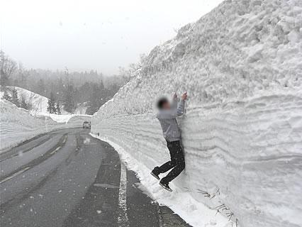 春の八甲田 雪の回廊 旦那くん