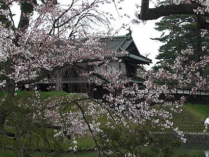 弘前公園 外堀の桜(追手門近辺)