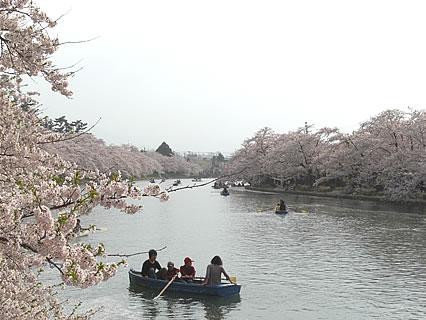 弘前公園 さくらまつり 橋の上から見た桜のトンネル