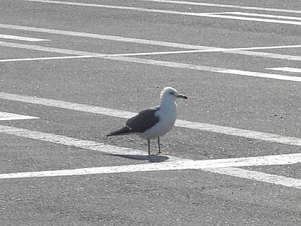 青森港フェリー埠頭 カモメ
