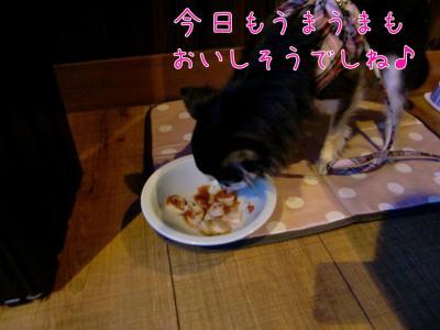 CIMG0046_convert_20110515140343.jpg