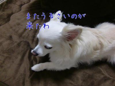 CIMG0613_convert_20110609150111.jpg