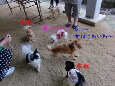 CIMG1101_convert_20110617155150.jpg