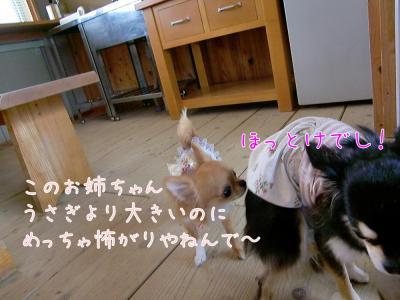 CIMG1123_convert_20110617155418.jpg