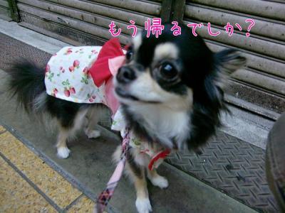CIMG2114_convert_20110809155905.jpg