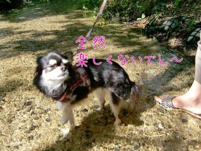 CIMG2662_convert_20110823162455.jpg