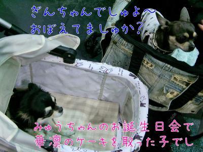 CIMG3800_convert_20110930163923.jpg