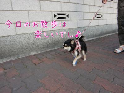 CIMG9979_convert_20110515140922.jpg