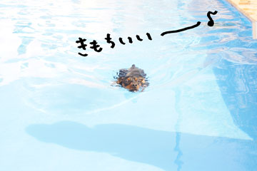 DSC01955-1.jpg