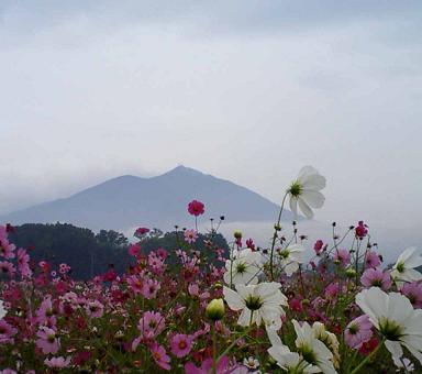 チョッと前の写真 (筑波山とコスモス)