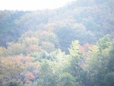 2009_1129yabituoiso0007.jpg