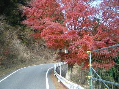 2009_1129yabituoiso0022.jpg