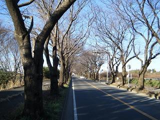 2009_1220zushi2000026.jpg