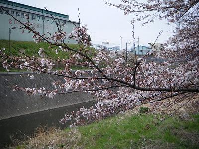 2010_0328DOUSHI0022.jpg