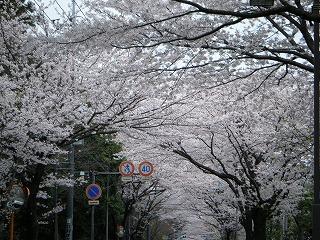 2010_0404hanami0011.jpg