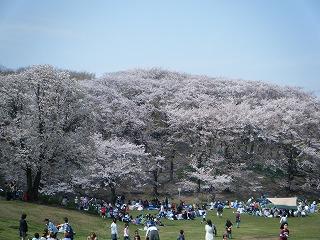 2010_0411hanami0004.jpg
