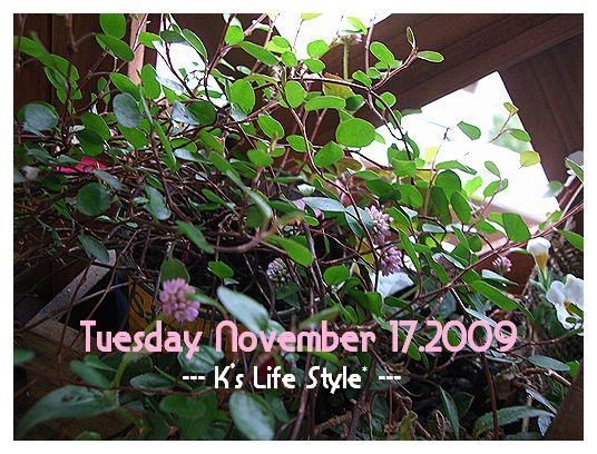 11月17日雨