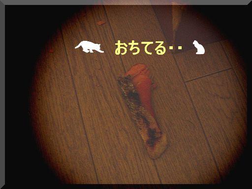 落ちた鮭・・・.