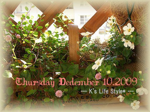 12月10日曇りのち雨