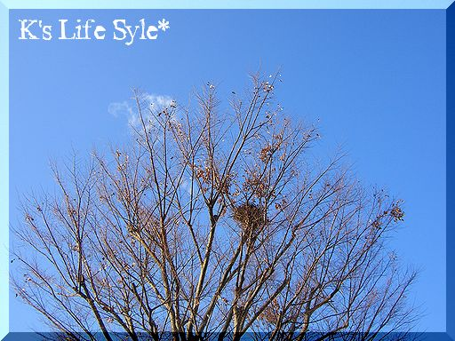大きな木の巣