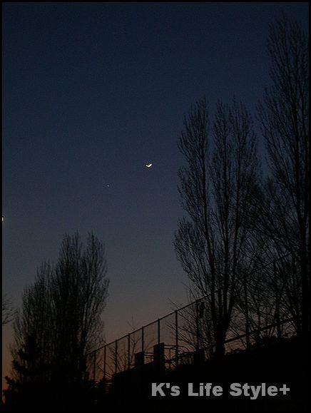 ポプラと月