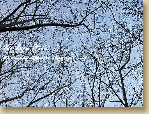 桜並木に・・・