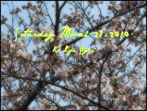 3月27日 晴れ