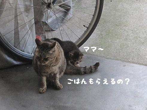 ママと子猫