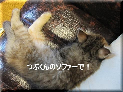 堂々たるネコ