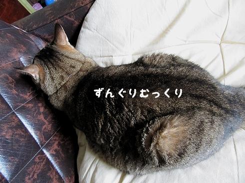 ずんぐりむっくり.jp