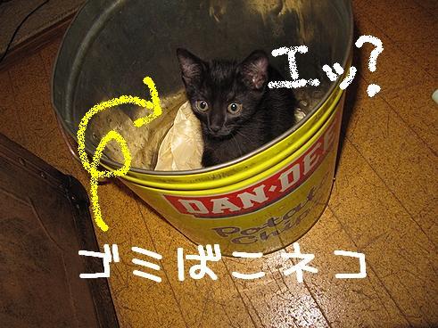 ゴミ箱ネコ.jpg