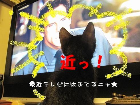 テレビ好き.jpg